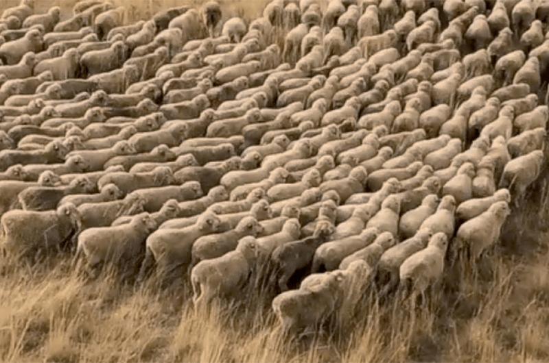 Pastoreo y agricultura regenerativa