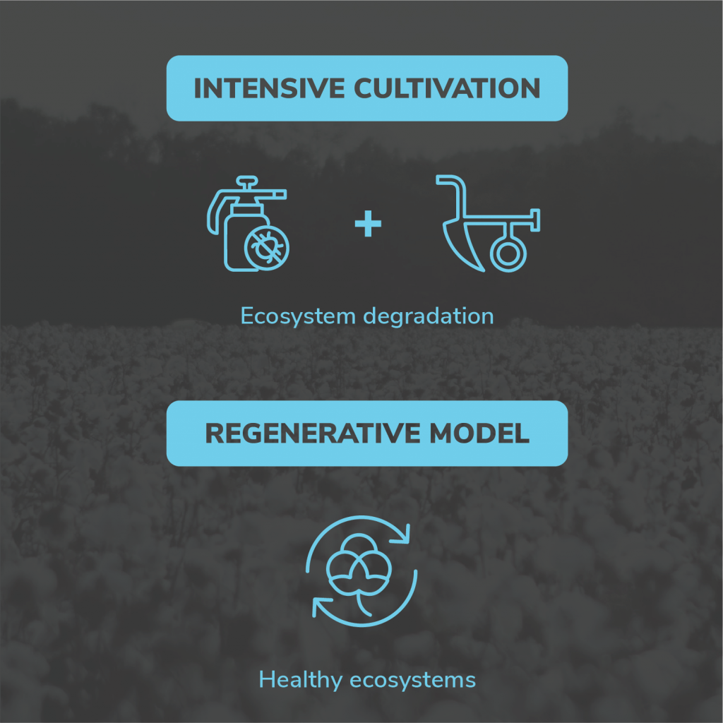 Intensive cultivation vs regenerative model