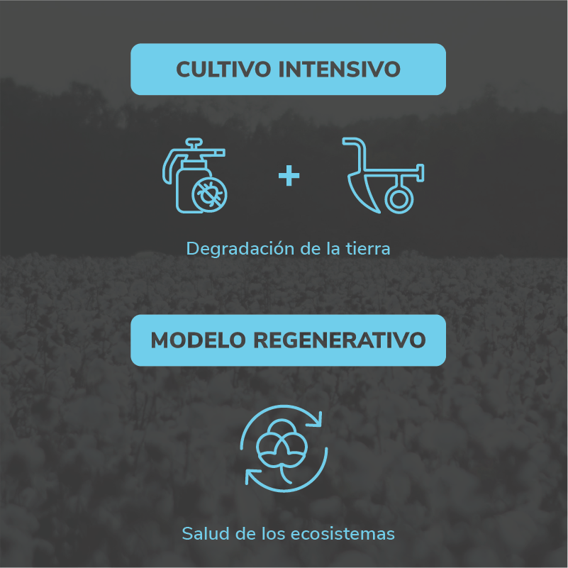 Cultivo intensivo vs Modelo regenerativo